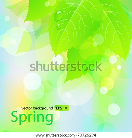 Spring  background  with green leaves. Vector EPS 10 - stock vector