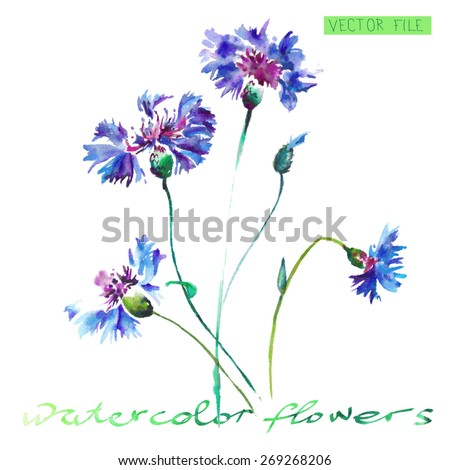 """spring blue flowers isolated on white. Watercolor Vector Flowers. Vector Watercolour Flowers.Album""""New bouquets by a holiday from water color flowers"""".""""Blue flowers watercolor."""" - stock vector"""