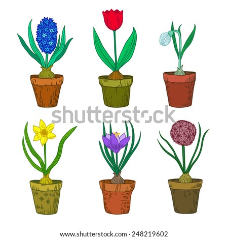 Spring flovers vector set.