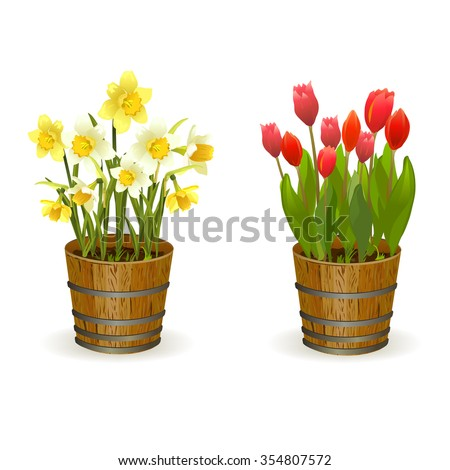Spring flowers daffodils and tulips. vector illustration
