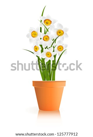 Spring Gardening. White narcissus flowers in pot on white background. Vector eps10 illustration. Raster file included in portfolio