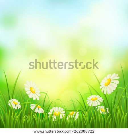 Spring meadow with green grass and daisies, vector illustration - stock vector
