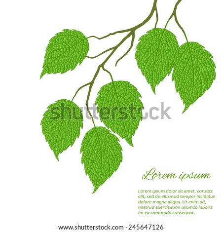 Spring twig birch with green leaves on a white background - stock vector