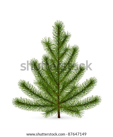 Spruce, high-quality vector - stock vector