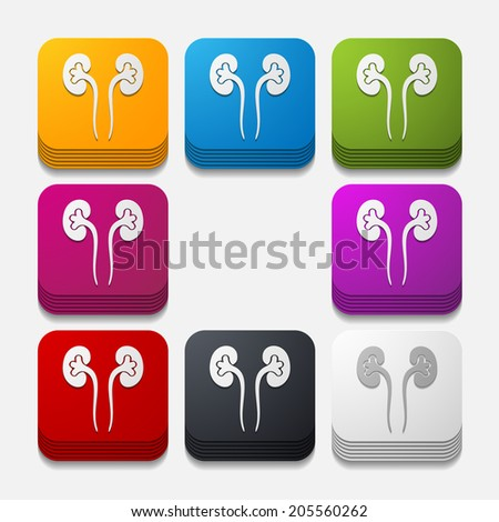 square button: kidneys - stock vector