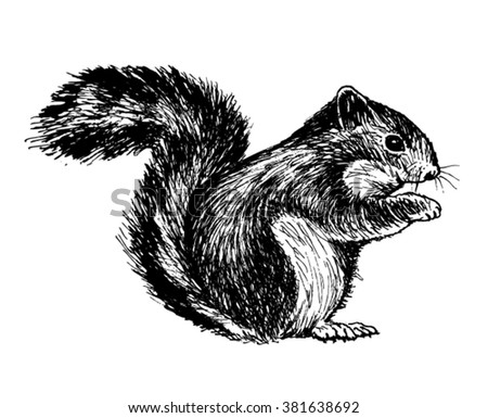 squirrel vector sketch