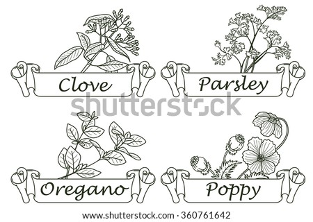 Stock illustration. Line infographic. Herbs and spices. - stock vector