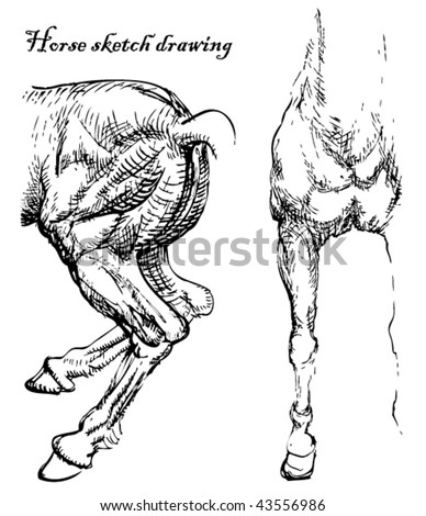 Horse Anatomy Stock Images Royalty Free Images Vectors