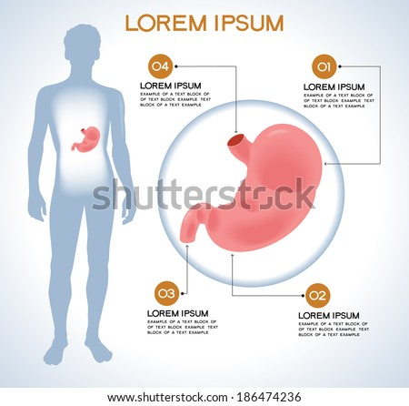Stomach. Modern medical infographics. Internal organs in a human body. Anatomy of people - stock vector