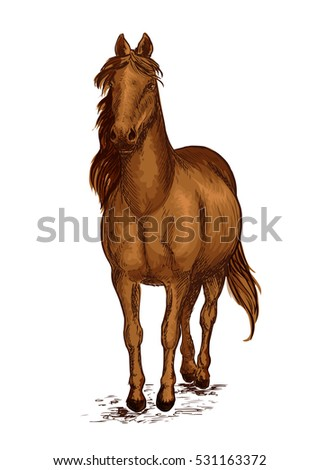 Strong brown arabian horse mustang. Sport race stallion proudly pace walking on ground with wavy mane. Vector color sketch portrait