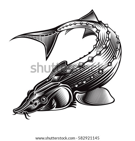 Sturgeon fish bend silhouette engraving style stock vector for White river fish market menu