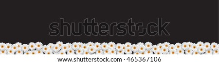 Stylish Border with White Flowers chamomiles on black. Floral Summer Banner. Vector illustration