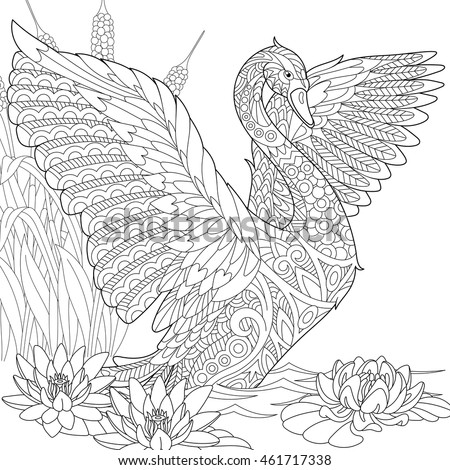 stylized beautiful swan among water lilies lotus flowers and reed grass freehand sketch