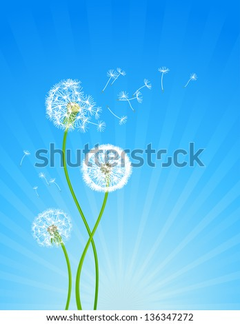 Summer background with dandelion flowers - stock vector