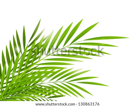 Summer background with palm leaves - stock vector