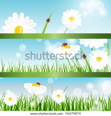 Summer banners with daisy and ladybugs in green grass - stock vector