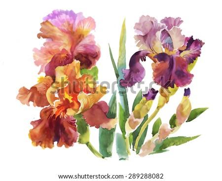 Summer garden iris flowers, watercolor vector illustration - stock vector