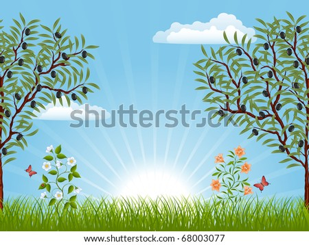 Summer landscape with an olive trees. Vector illustration.