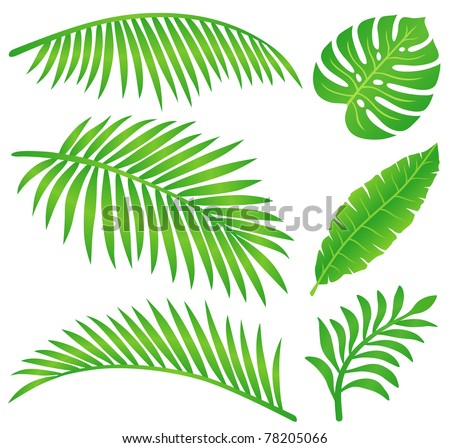 summer leaf - stock vector