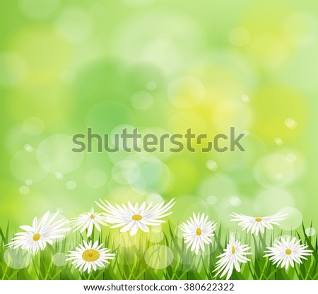 Summer meadow background with white daisy flowers