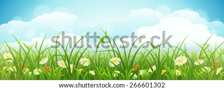 Summer meadow landscape with green grass, flowers and blue sky - stock vector