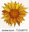 Sun color. Sunflower - stock vector