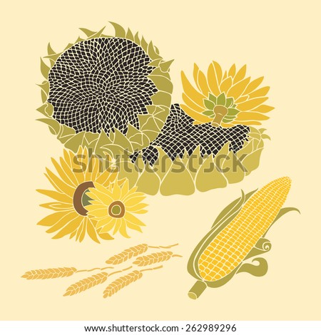 Sunflower and Corn greeting card. Yellow and green flower on the bright background - stock vector