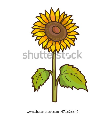Sunflower Cartoon Floral Drawing Vector Illustration Isolated On White
