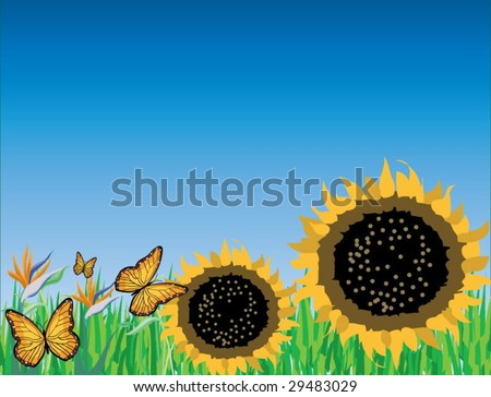 Sunflower facing towards the sky.the spring is here. - stock vector