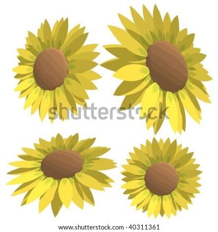 sunflower vector illustration - stock vector