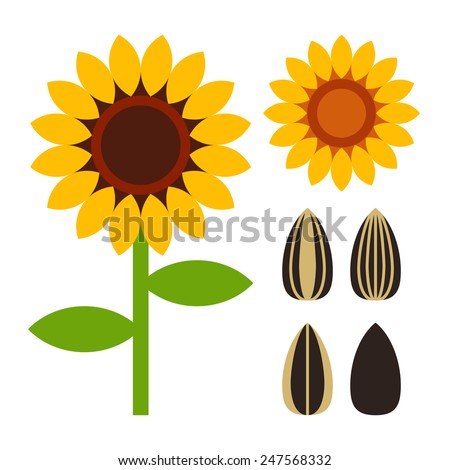 Sunflowers and seeds symbol isolated on white background - stock vector