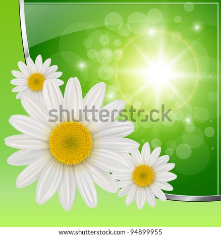 Sunny green background with daisy flowers, vector.