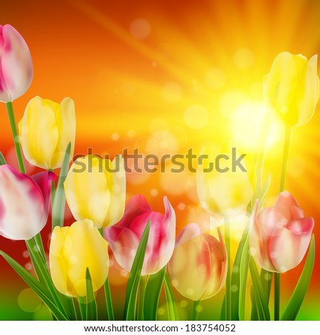 Sunset Over Field of Colorful Tulip Flowers Blooming. And also includes EPS 10 vector - stock vector