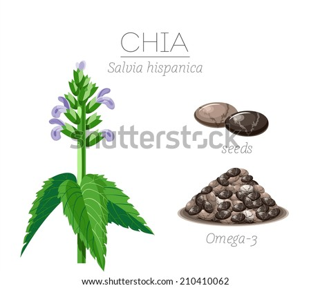 Superfood chia seeds. Vector image - stock vector