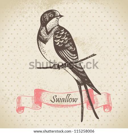 Swallow bird, hand-drawn illustration - stock vector