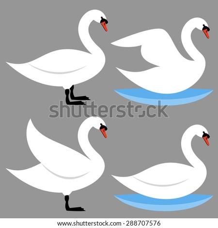Swan - stock vector