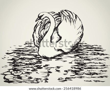 Swan are bird of the family Anatidae within the genus Cygnus. Vector monochrome freehand ink drawn background sketchy in art scribble antiquity style pen on paper with space for text - stock vector