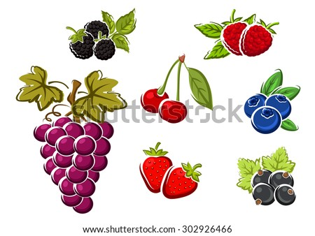Sweet juicy berries with bunch of violet grape, strawberry, blackberry, raspberry, cherry, black currant, blueberry. Isolated on white background - stock vector