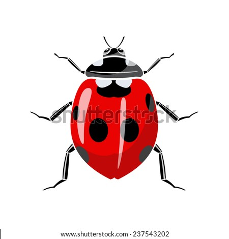Symbol of a ladybug is on a white background. - stock vector