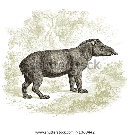 """Tapir - vintage engraved illustration - """"Histoire naturelle"""" by Buffon and Lacepe  ed. Alfred Mame - Tours 1881 - stock vector"""