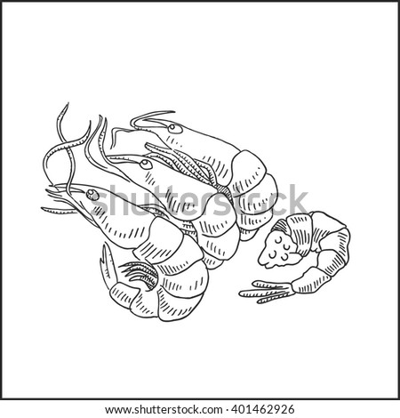 Tasty shrimp seafood hand drawn sketch. Vector hand drawn shrimps illustration for seafood design.