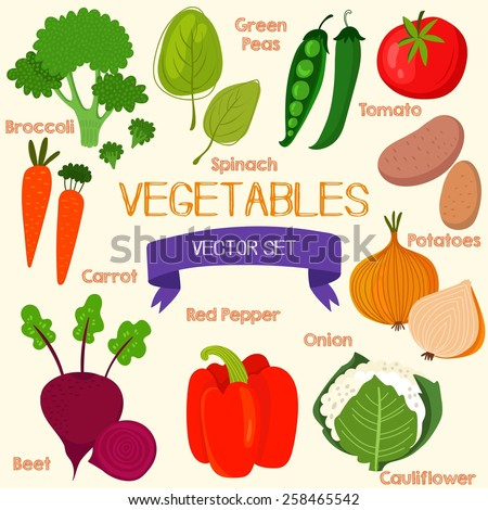 Tasty vegetables in bright set. Spinach, broccoli, carrots, beet, pepper, cauliflower, potatoes, onion, tomatoes and green peas  - stock vector