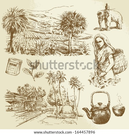tea plantations - hand drawn set - stock vector