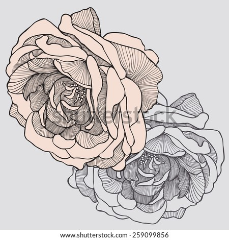 Tea rose, hand-drawing. Vector illustration. - stock vector
