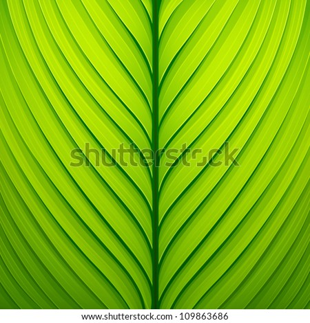 Texture of a green leaf. Vector illustration - stock vector