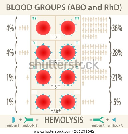 The ABO and RhD blood groups systems diagram and infographic - stock vector