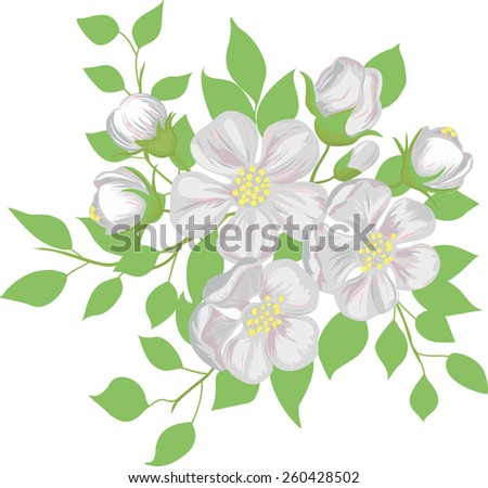 The blossoming apple-tree branch. Vector illustration. - stock vector