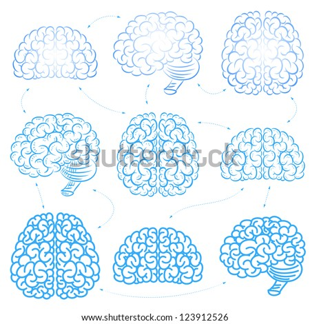 The brains - stock vector