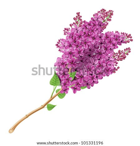 The branch of blooming lilacs. EPS 10. Contains transparent objects, and blend modes. - stock vector
