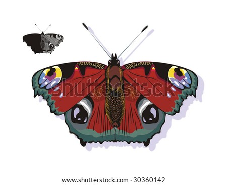 The butterfly  red-black isolated